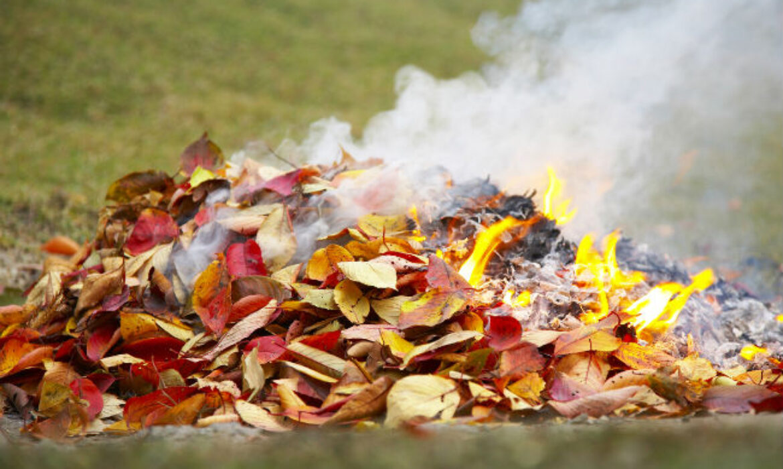 ВАЖНО! О последствиях сжигания опавших листьев, сухой травы и веток.